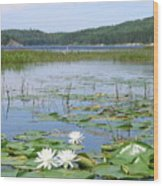 Beyond The Lilly Pads Wood Print