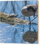 Bff Turtle And Canda Goose Wood Print