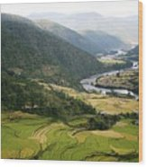 Bhutan Rice Fields Wood Print