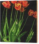 Bicolor Tulips Wood Print