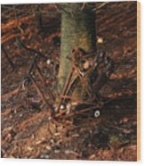 Bicycle Abandoned In A Forest Wood Print