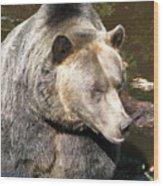 Big Bear Wood Print