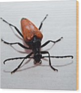 Big Beetle Wood Print