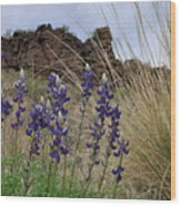 Big Bend Bluebonnets Wood Print