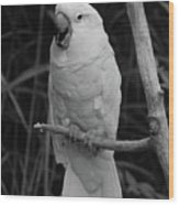 Big Bird Wood Print