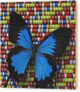 Big Blue Butterfly Wood Print