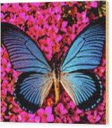 Big Blue Butterfly On Kalanchoe Flowers Wood Print