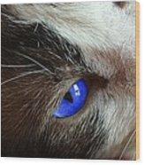 Big Blue Eyes Cat Wood Print