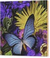 Big Blue Wings Wood Print