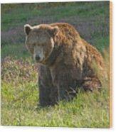 Big Brown Bear Wood Print