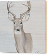 Big Buck Wood Print