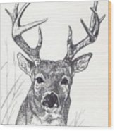 Big Buck Wood Print