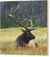 Big Bull 2 Wood Print