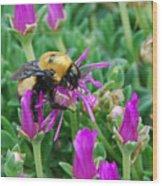 Big Bumblebee Wood Print