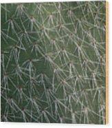 Big Cactus Pins. Close-up Wood Print