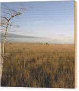 Big Cypress Wood Print