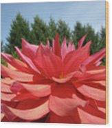 Big Dahlia Flower Blooming Summer Floral Art Prints Baslee Troutman Wood Print