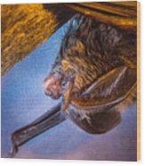 Big Eared Bat At Sunrise Wood Print