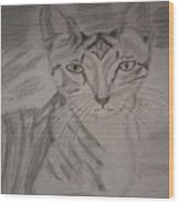 Big Ears Kitten Wood Print