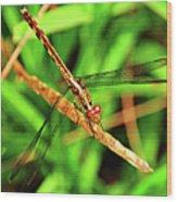 Big Eyed Dragonfly Wood Print