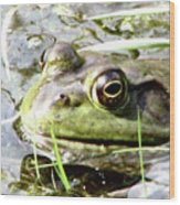 Big Eyed Frog In A Marsh Wood Print