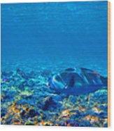 Big Fish. Underwater World. Wood Print