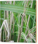 Big Grass Blade Wood Print