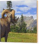 Big Horn 3 Wood Print