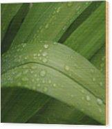 Big Lily Wood Print