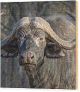 Big Old Bull Wood Print
