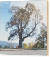 Big Old Tree Wood Print