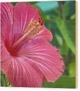 Big Pink Hibiscus Wood Print