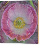 Big Poppy 4 Wood Print