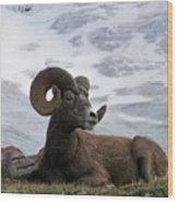 Big Ram Wood Print