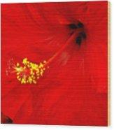 Big Red Caribbean Hibiscus Wood Print