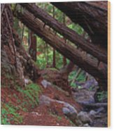 Big Sur Redwood Canyon Wood Print