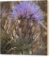 Big Thistle 2 Wood Print