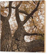 Big Tree Wood Print by James BO  Insogna