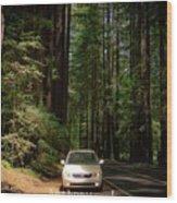 Big Tree Road Wood Print