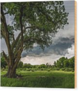 Big Tree - Tall Cottonwood And Storm In Texas Panhandle Wood Print