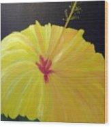 Big Yellow Hibiscus Wood Print