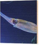Bigfin Reef Squid Wood Print