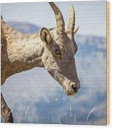 Bighorn In Yellowstone Wood Print