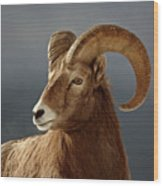 Bighorn Sheep In Winter Wood Print