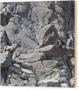 Bighorns Romantic Stare Wood Print