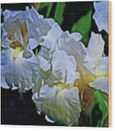 Billowing White Irises Wood Print