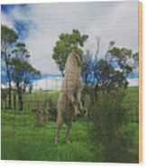 Billy Goat At The Lookout Post Wood Print
