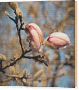 Biltmore Cherry Blossom Wood Print