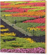 Biltmore Colors Wood Print