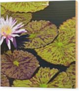 Biltmore Lily  Wood Print